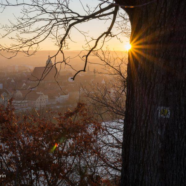 Abendlicht am Burglehnpfad in Pirna
