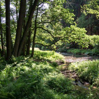 Wanderweg am Ufer der Polenz, nahe der Märzenbecherwiesem im Polenztal