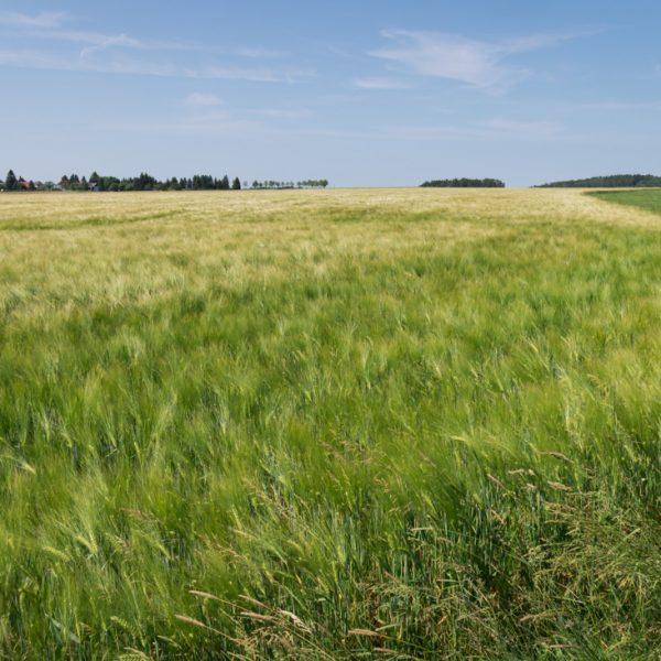 Wanderung entlang der Felder bei Heeselicht
