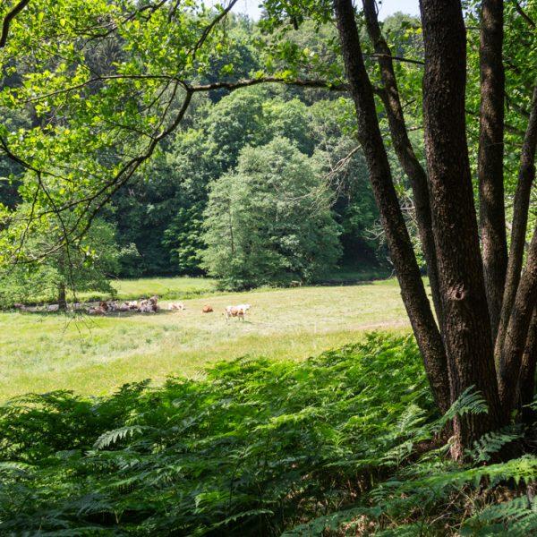 Wiesen und Weide am Polenztalweg, nahe der Bockmühle