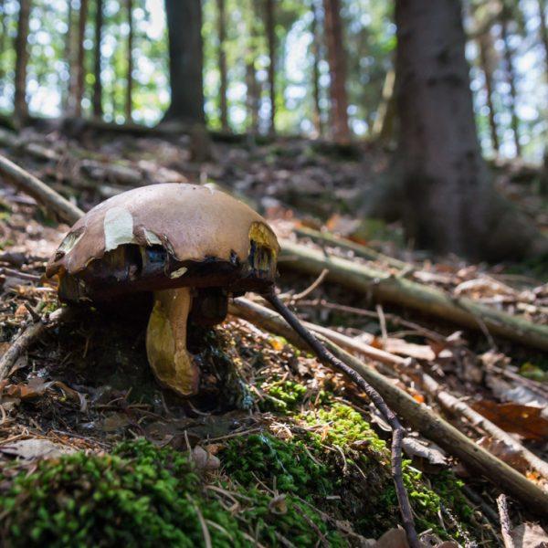 Pilz am Hang, Wanderweg Polenztalweg