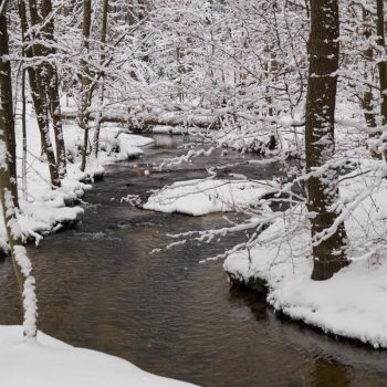 Flusslauf der Prießnitz im Winter