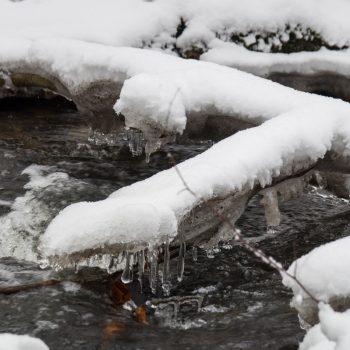Schnee und Eis an einem Zweig in der Prießnitz