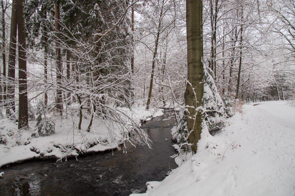An der Prießnitz, Winterwald