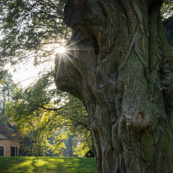 Lichtstimmung im Schlosspark Proschwitz