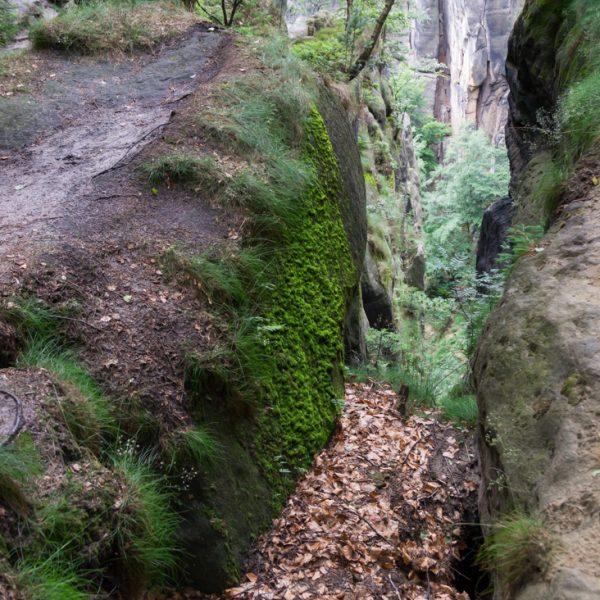 oberhalb der Rübezahlstiege mit Blick in Richtung Heringsgrund