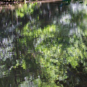 Am Flussufer der Roten Weißeritz, Spiegelung im Wasser