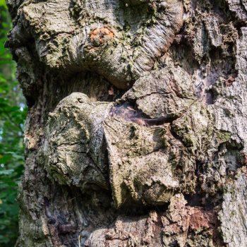 Struktur eines Baumstammes, am Weg zur Schönen Höhe
