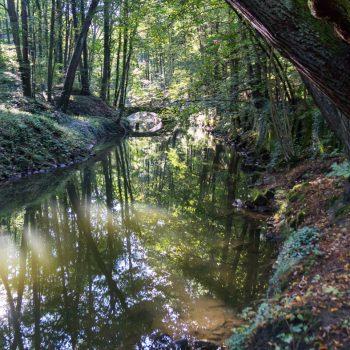 Am Ufer der Wesenitz im Liebethaler Grund