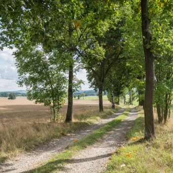 Auf dem Leiermühlenweg nach Dürrröhrsdorf-Dittersbach