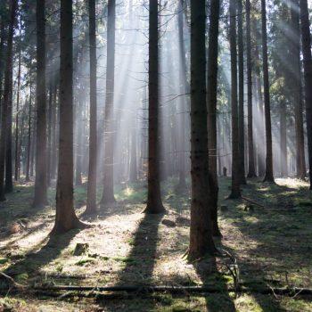 Morgenstimmung in der Dresdner Heide, Lichtstrahlen