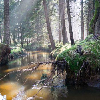 am Ufer der Prießnitz und nahe der Breiten Furt in der Dresdner Heide