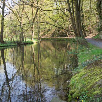 Am Ufer der Wesenitz, im Tal unterhalb des Schloß Lohmen