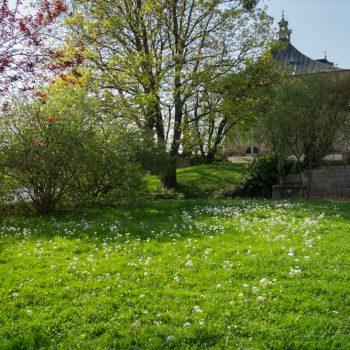 blühende Wiesen im Schloßpark Pillnitz