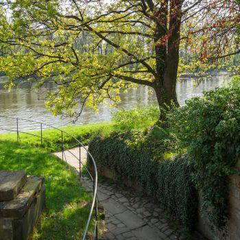im Schloßpark Pillnitz mit Blick auf die Elbe