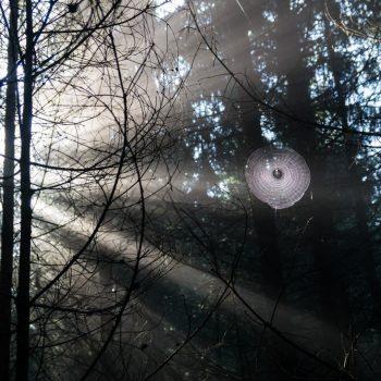 Morgenstimmung in der Dresdner Heide, Gespinst und Licht
