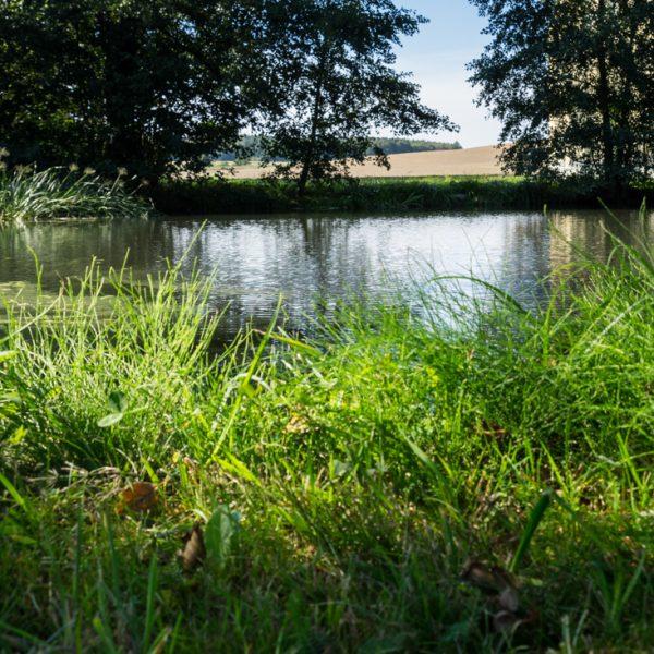 Am Teich in Rennersdorf-Neudörfel