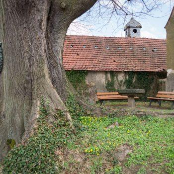 Gerichtslinde und steinerner Tisch im alten Dorfkern von Oberwartha