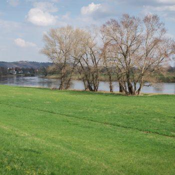 grüne Elbwiesen am Elberadweg bei Radebeul