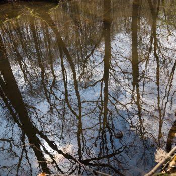 Spiegelung im Wasser der Prießnitz, Dresdner Heide