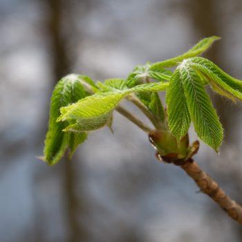 Frühlingserwachen in der Dresdner Heide