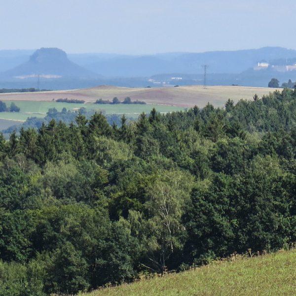 Ausblick nahe der Quohrener Kipse auf den Lilienstein und die Festung Königstein