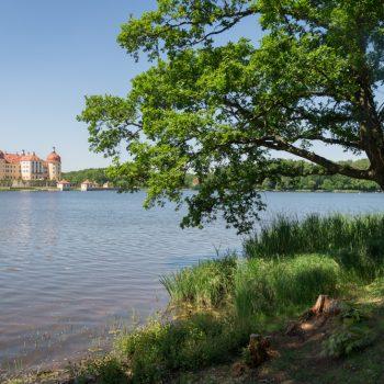 Blick vom Rundweg am Schlossteich auf das Schloss Moritzburg