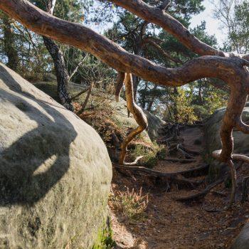 Alter Baum und Sandstein am Rauenstein-Gratweg