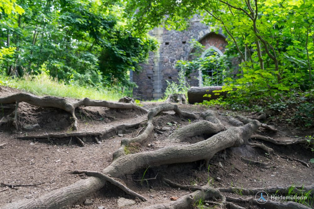 Wurzeln und künstliche Ruine Pillnitz