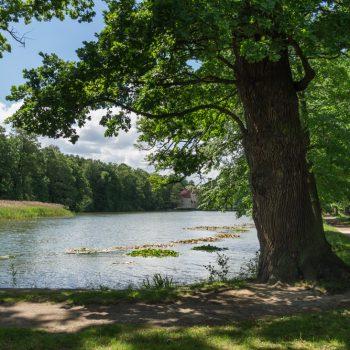 Rundweg um den Schlossteich, alte Bäume im Schlosspark Hermsdorf