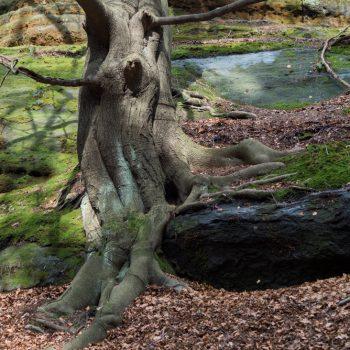Schrammsteine, Baum mit Waldgeist
