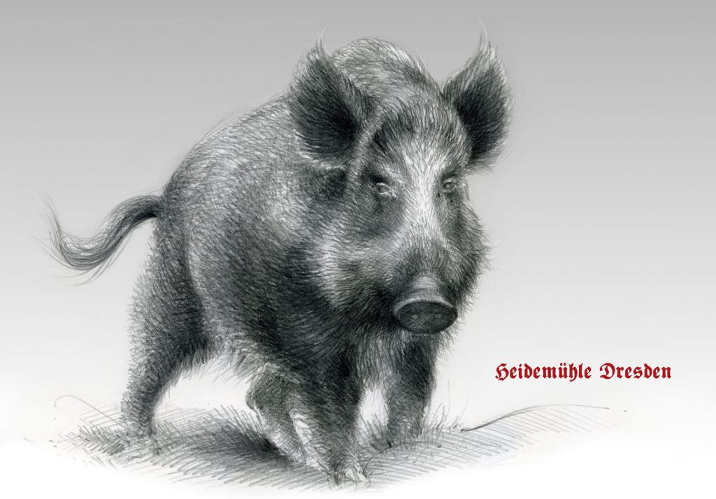 Wildschwein, Schwarzwild | Graphit auf Papier | 420 x 297 mm | 2016