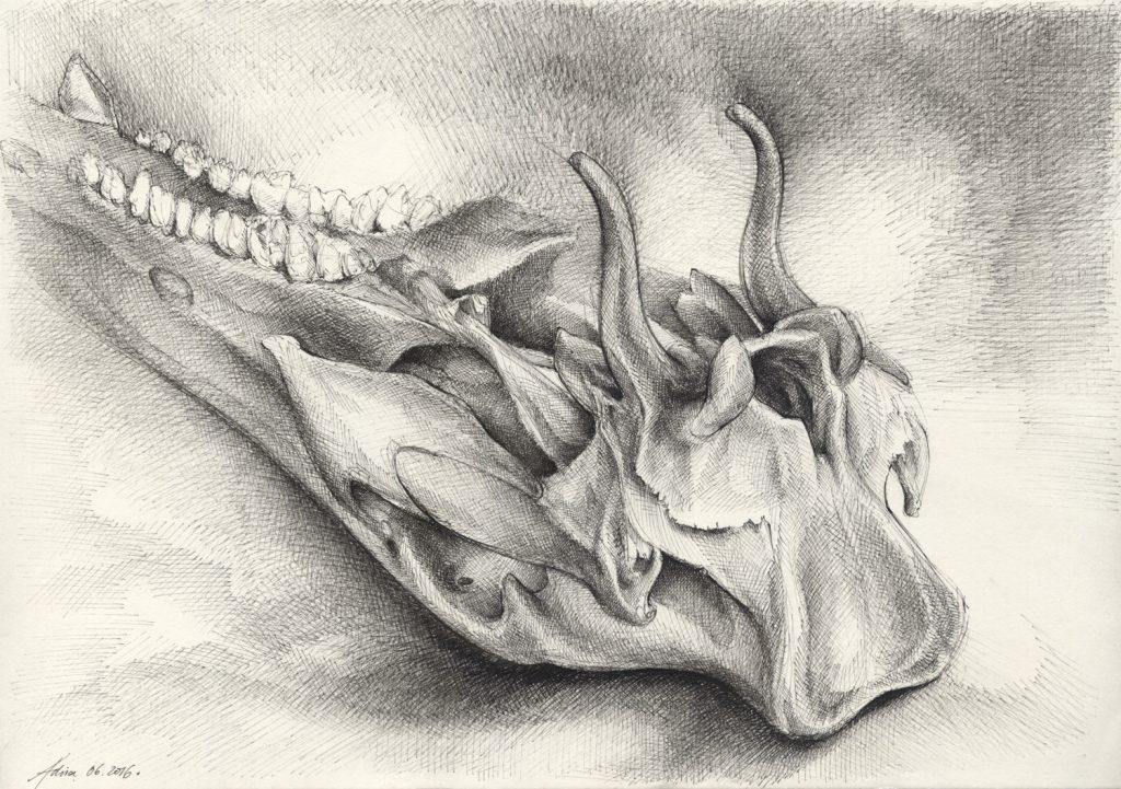 Schwarzwild Schädelknochen | Tusche auf Papier | 420 x 297 mm | 2016