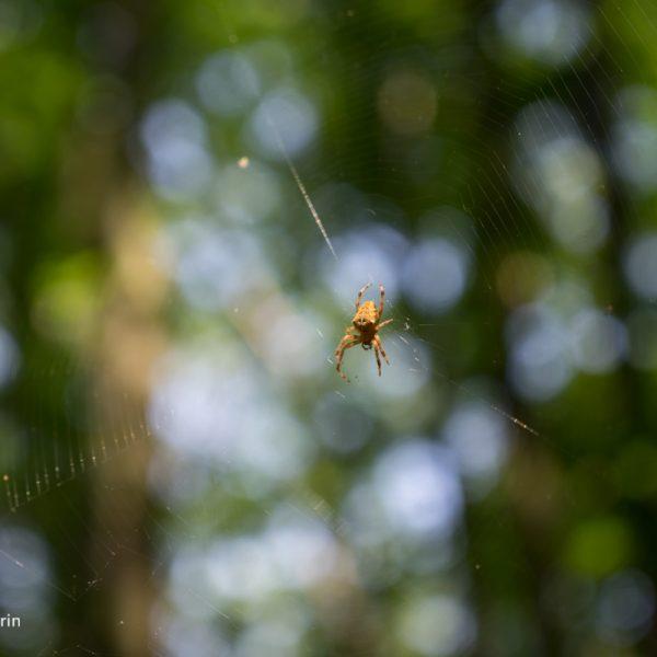 Spinne am Flussufer