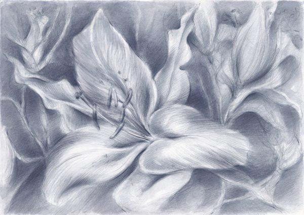Lilienblüten | Stillleben | Buntstift auf Papier, blau laviert | 450 x 320 mm | 2012