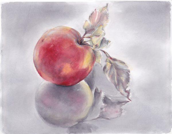 Roter Apfel auf reflektierendem Grund | Stillleben | Aquarellfarbe auf Papier | 300 x 230 mm | 2011