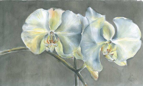 Orchideenblüten | Stillleben | Aquarellfarbe auf Papier | 500 x 310 mm | 2010