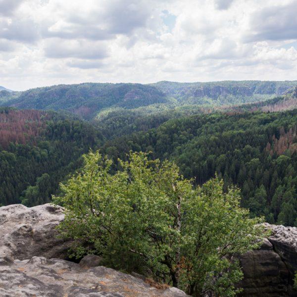 Aussicht vom Teichstein in die dicht bewaldete Hintere Sächsische Schweiz