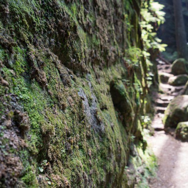 mit Moos und Farnen benetzte Felswand, Teufelsschlüchte