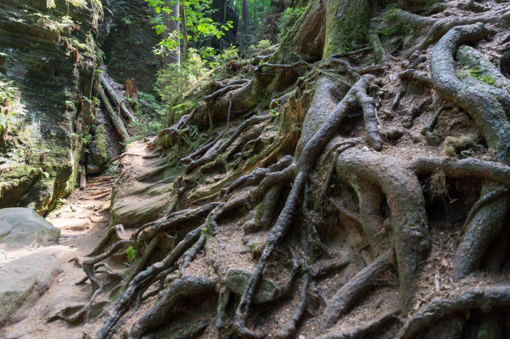 faszinierende Wurzel neben der Heringshöhle, Teufelsgrund