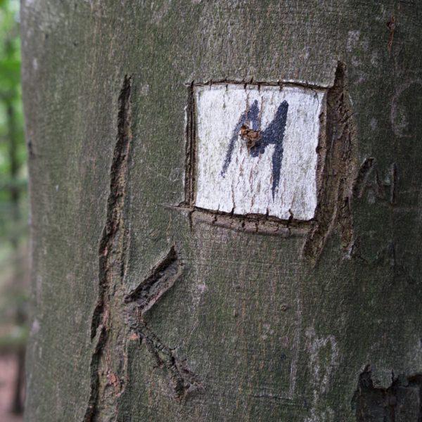 Malerweg, Wegzeichen an einem Baumstamm, Abstieg auf dem Schwarzbergweg