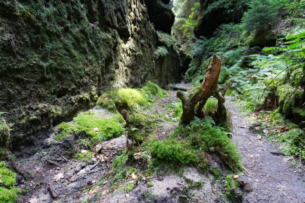 Felsspalte und bemooste Felswände im Zscherregrund
