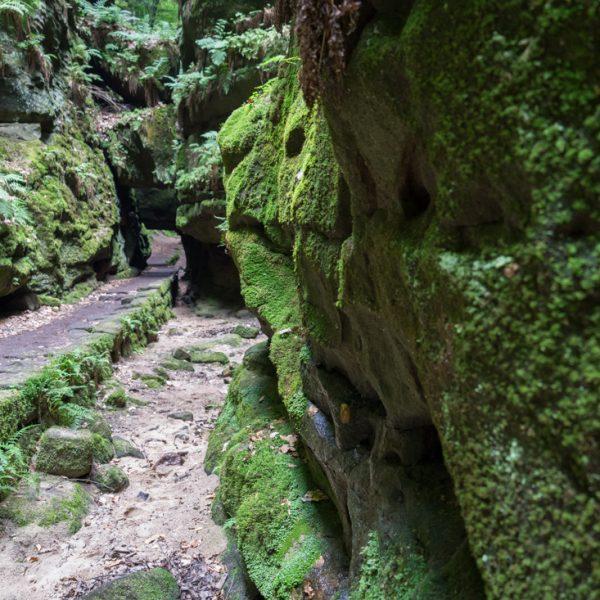 Felsentor im Uttewalder Grund, mit Moos benetzte Felswand
