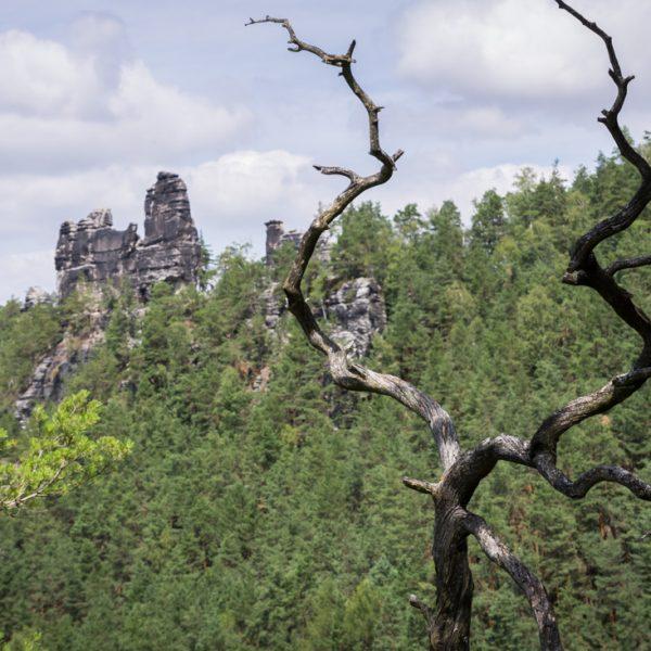 Blick zum Kletterfelsen Lokomotive, Elbsandsteingebirge
