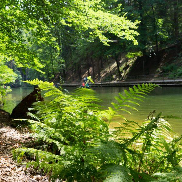 Am Ufer des Amselsees, Wandern in Rathen