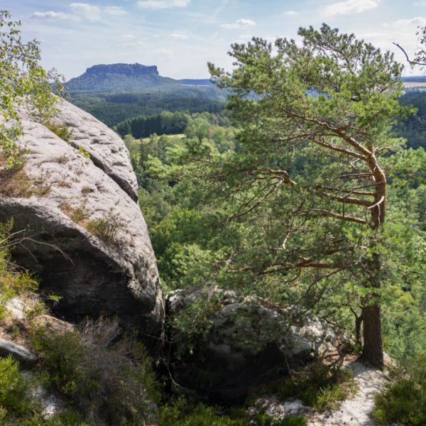 Ausblick vom Gamrig in Richtung Lilienstein