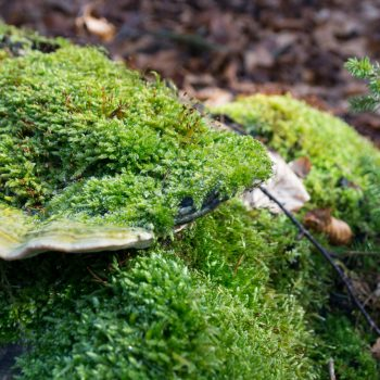 Moos und Pilze am Wegesrand des Kannenhenkel, Dresdner Heide