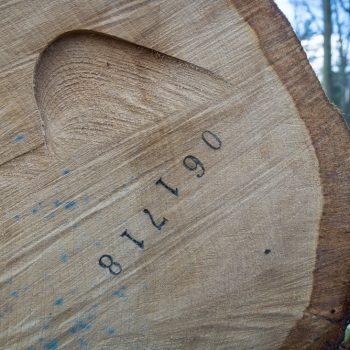 nummerierter Baumstamm an der Kreuz Sieben, Dresdner Heide