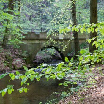 Kellerbrücke in der Dresdner Heide