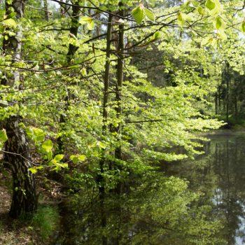 Naturdenkmal Böses Loch an der Alten Eins, Dresdner Heide